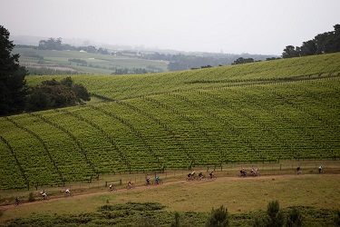 Riders in action during stage two of the FNB Wines2Whales MTB Ride on Tuesday. Photo: Cherie Vale / Newsport Media