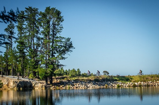 Mountain bikers in action during stage one of the Wines2Whales Ride. Photo: Tobias Ginsberg