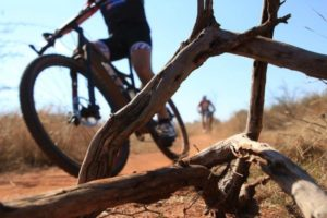 Dry bushveld at the Waterberg MTB Encounter