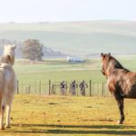 Horses look on as riders take on the Around The Pot Overberg 100 Miler.