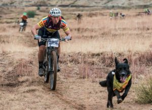 A dog takes the lead at the Lesotho Sky