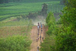 Riding alongside vineyards at Wines2Whales