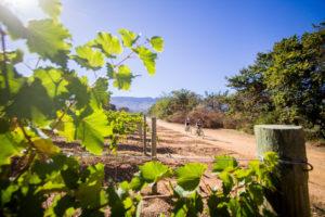 Scenic route photo Winelands Encounter