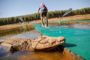 A rider passes a crocodile while crossing a bridge on day one of sani2c Trail.