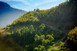 Riders enjoy beautiful forest sections on day two of sani2c Trail.