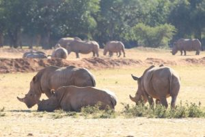 Spotting rhino on stage one of the Liberty Waterberg Encounter