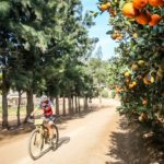 Rider moving through an orchard during the Around the Pot 100 Miler. Photo: Oakpics