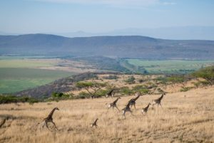 Some spectacular wildlife was spotted during stage three of the Berg and Bush 'Descent'. Photo: Em Gatland/Nikon