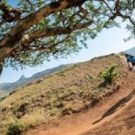 A rider moving swiftly down a descent during stage one of the Berg and Bush 'Great Trek'. Photo: Em Gatland