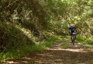 A rider moving through a wide track forest section in stage three of the Cape Pioneer Trek. Photo: Carli Smith