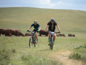 Riders pictured on a flat grass section with cattle in the backdrop during stage one of the Cape Pioneer Trek. Photo: Marike Cronje