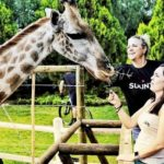 Spectators and guests pictured feeding a giraffe at the TransCape MTB Encounter. Photo: Jacques Marais